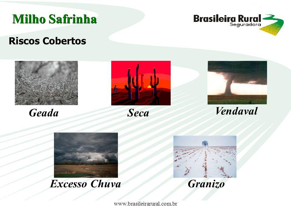 www.brasileirarural.com.br Riscos Cobertos GeadaSeca Vendaval Excesso ChuvaGranizo Milho Safrinha