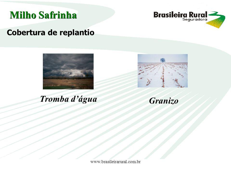 www.brasileirarural.com.br Cobertura de replantio Tromba dágua Granizo Milho Safrinha