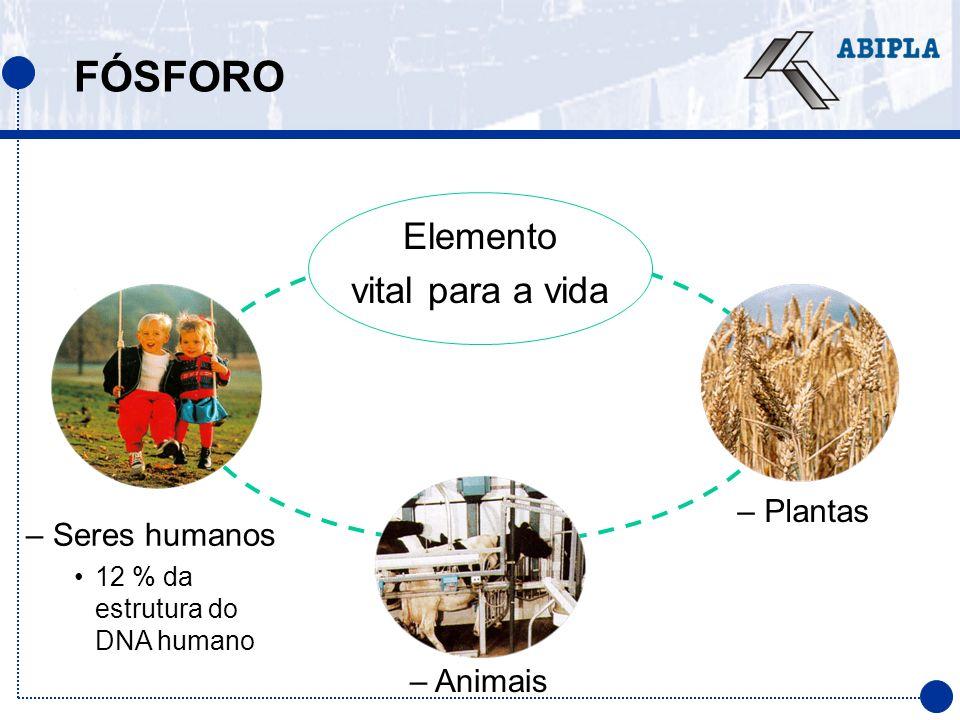 FÓSFORO Elemento vital para a vida – Seres humanos 12 % da estrutura do DNA humano – Plantas – Animais