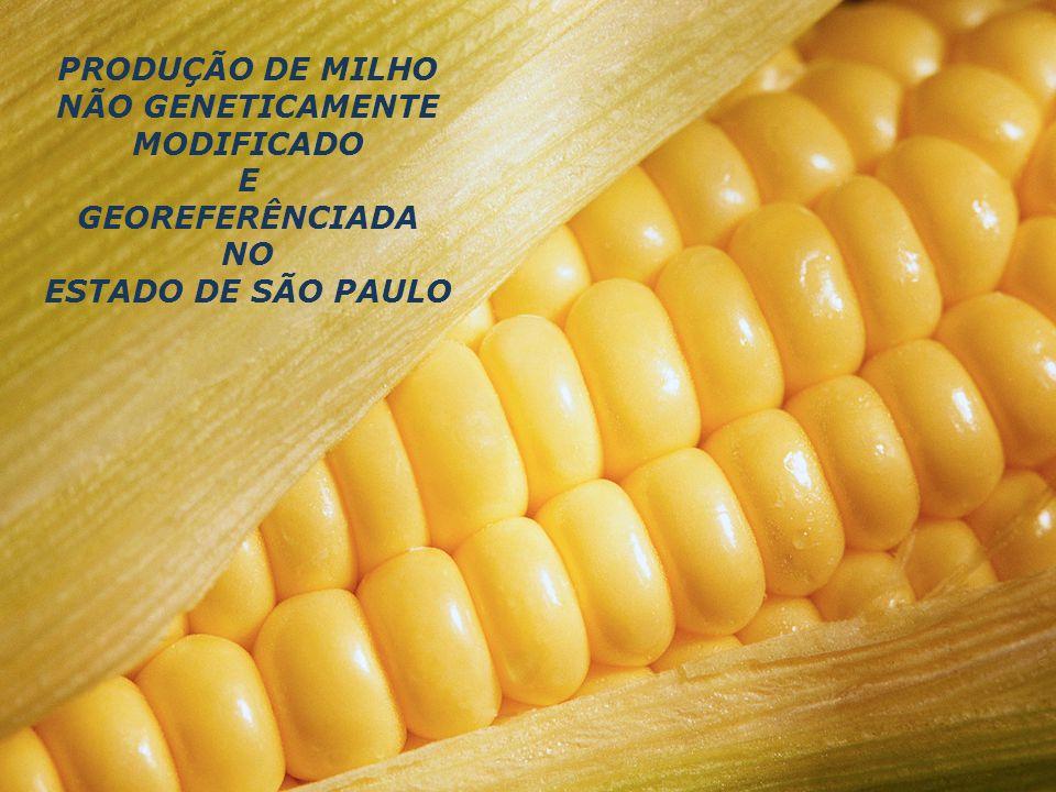 PRODUÇÃO DE MILHO NÃO GENETICAMENTE MODIFICADO E GEOREFERÊNCIADA NO ESTADO DE SÃO PAULO