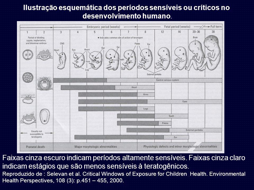 Faixas cinza escuro indicam períodos altamente sensíveis. Faixas cinza claro indicam estágios que são menos sensíveis à teratogênicos. Reproduzido de