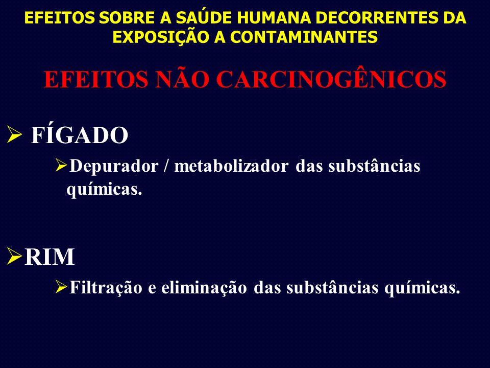 EFEITOS SOBRE A SAÚDE HUMANA DECORRENTES DA EXPOSIÇÃO A CONTAMINANTES EFEITOS NÃO CARCINOGÊNICOS FÍGADO Depurador / metabolizador das substâncias químicas.