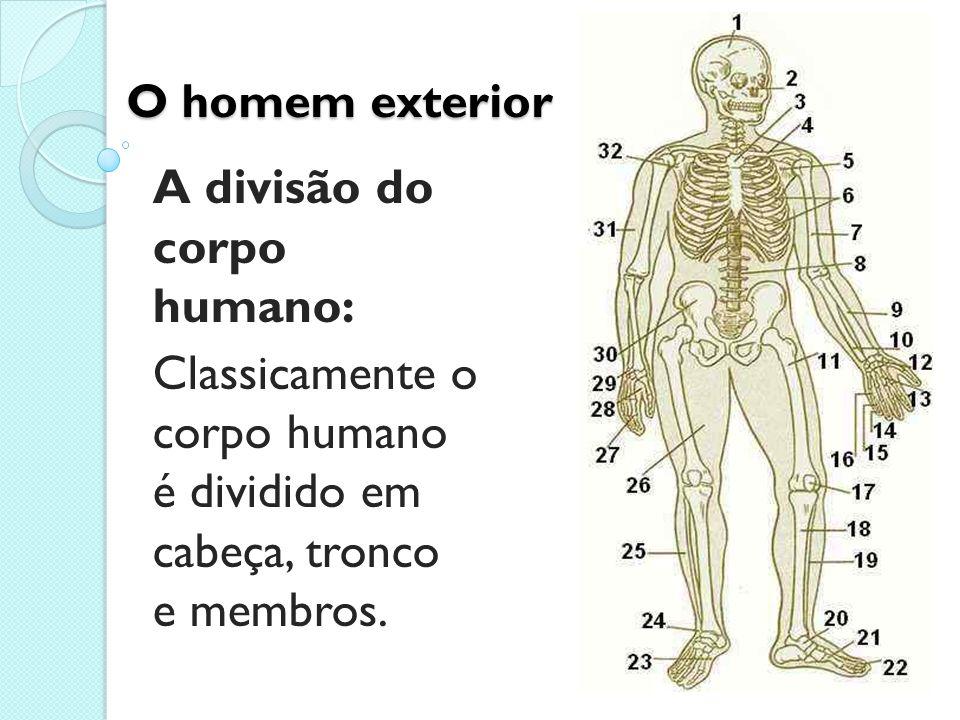O homem exterior A divisão do corpo humano: Classicamente o corpo humano é dividido em cabeça, tronco e membros.