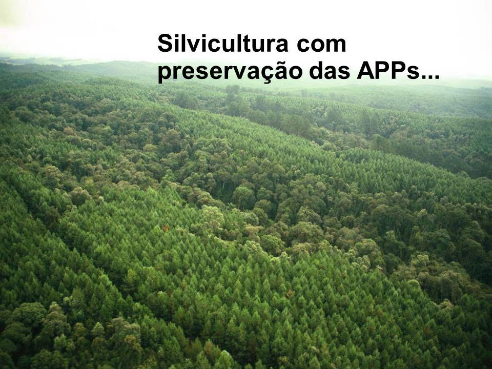 Silvicultura com preservação das APPs...