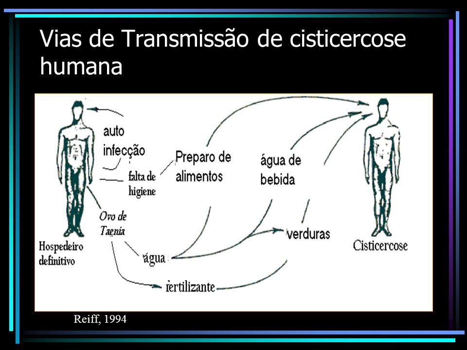 Rotas de transmissão da neurocisticercose humana Teniose Neurocisticercose Cisticercose ingestão de ovos ingestão de ovos ingestão de carne com cistic