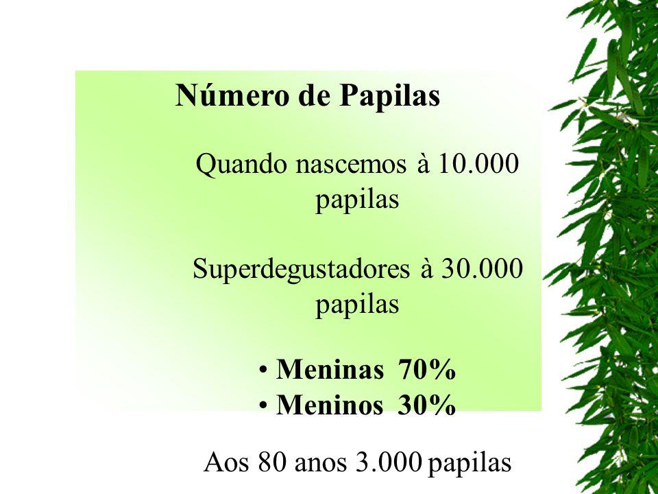 Número de Papilas Quando nascemos à 10.000 papilas Superdegustadores à 30.000 papilas Meninas 70% Meninos 30% Aos 80 anos 3.000 papilas