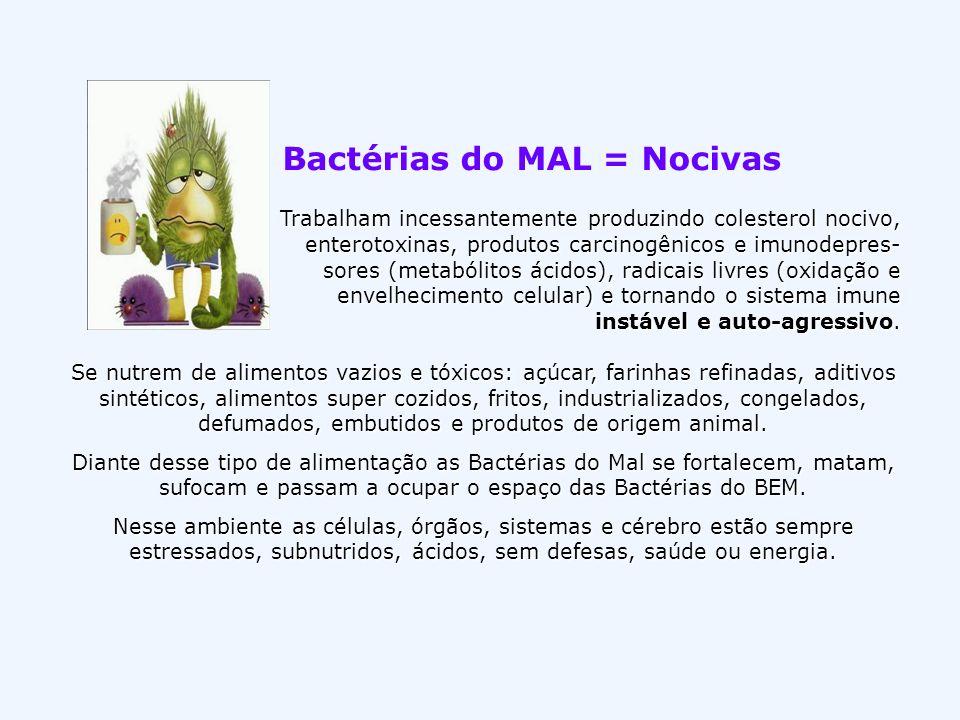 Bactérias do MAL = Nocivas Trabalham incessantemente produzindo colesterol nocivo, enterotoxinas, produtos carcinogênicos e imunodepres- sores (metabó
