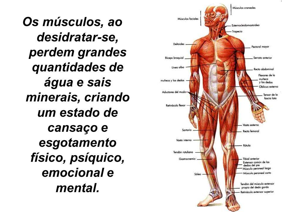 Os músculos, ao desidratar-se, perdem grandes quantidades de água e sais minerais, criando um estado de cansaço e esgotamento físico, psíquico, emocio