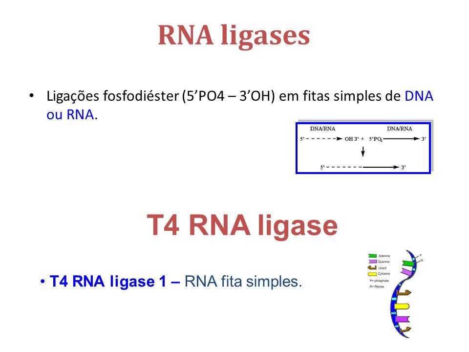 RNA ligases Ligações fosfodiéster (5PO4 – 3OH) em fitas simples de DNA ou RNA.