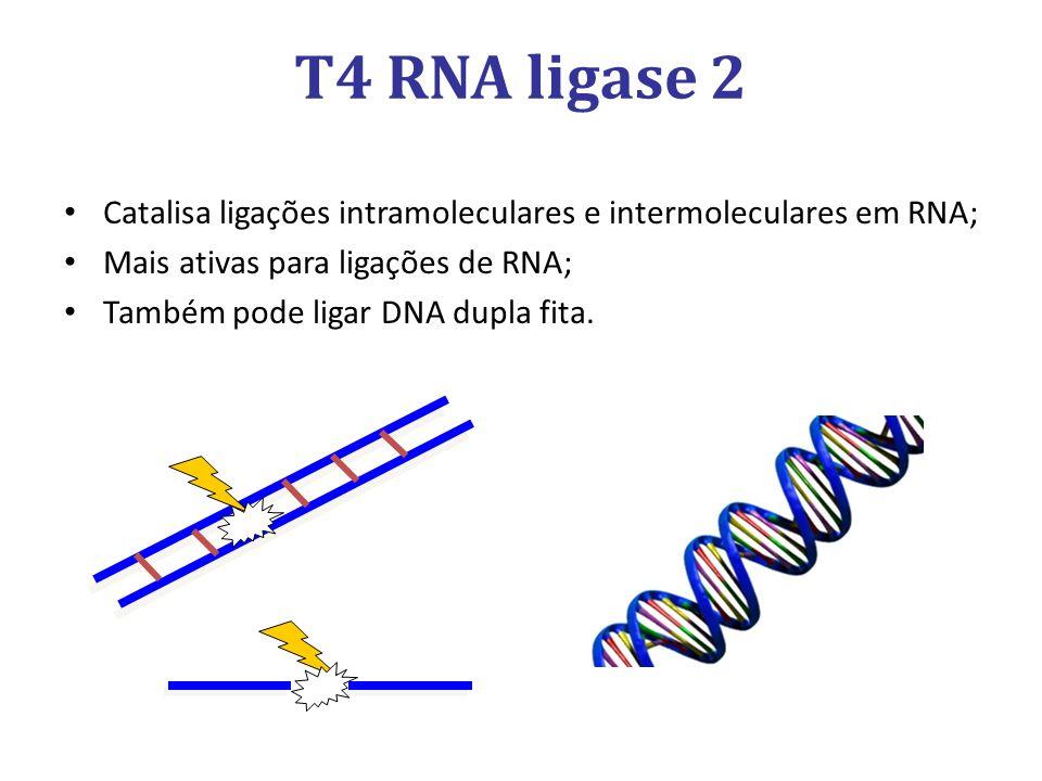Catalisa ligações intramoleculares e intermoleculares em RNA; Mais ativas para ligações de RNA; Também pode ligar DNA dupla fita.
