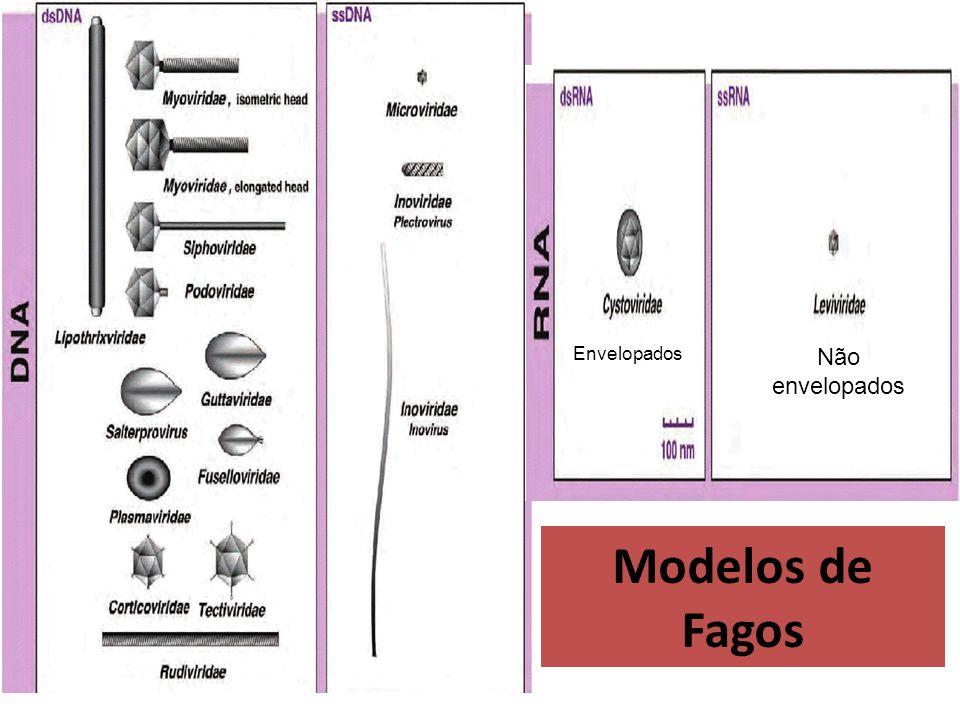 Fatores de Virulência Carreados por Fagos Fagos podem carregar consigo fatores de virulência: CAUSAR RECOMBINAÇÕES...