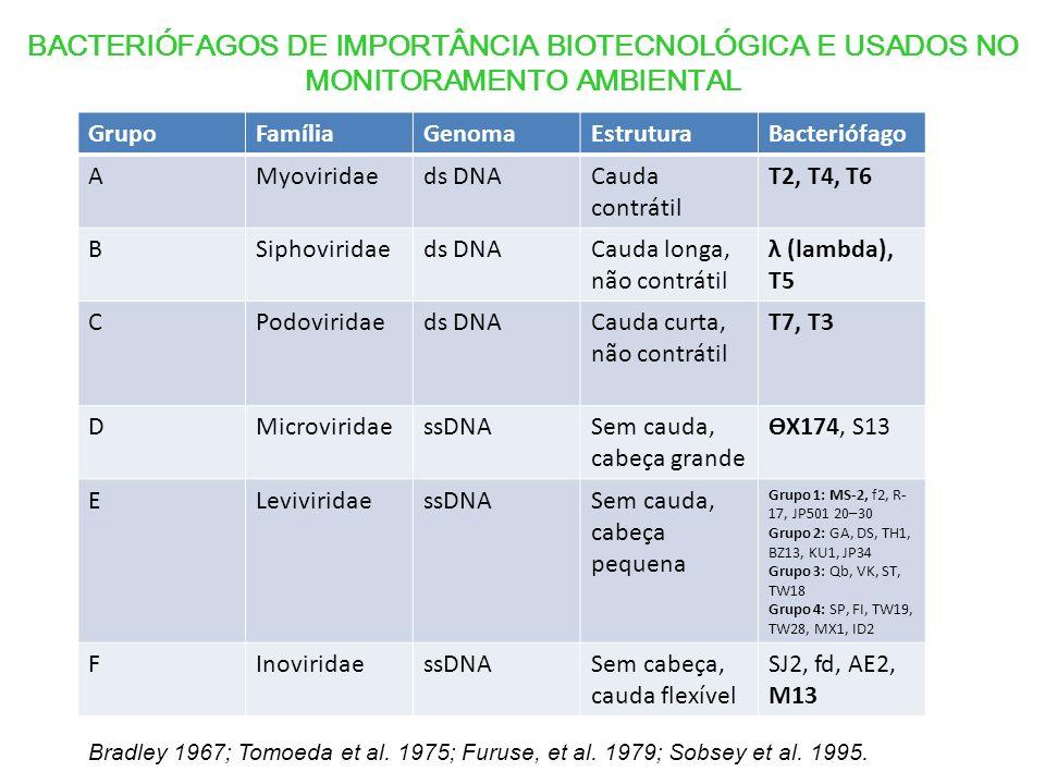 GrupoFamíliaGenomaEstruturaBacteriófago AMyoviridaeds DNACauda contrátil T2, T4, T6 BSiphoviridaeds DNACauda longa, não contrátil λ (lambda), T5 CPodoviridaeds DNACauda curta, não contrátil T7, T3 DMicroviridaessDNASem cauda, cabeça grande ѲX174, S13 ELeviviridaessDNASem cauda, cabeça pequena Grupo 1: MS-2, f2, R- 17, JP501 20–30 Grupo 2: GA, DS, TH1, BZ13, KU1, JP34 Grupo 3: Qb, VK, ST, TW18 Grupo 4: SP, FI, TW19, TW28, MX1, ID2 FInoviridaessDNASem cabeça, cauda flexível SJ2, fd, AE2, M13 BACTERIÓFAGOS DE IMPORTÂNCIA BIOTECNOLÓGICA E USADOS NO MONITORAMENTO AMBIENTAL Bradley 1967; Tomoeda et al.