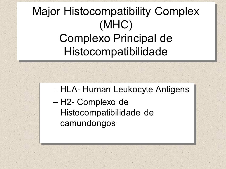 Major Histocompatibility Complex (MHC) Complexo Principal de Histocompatibilidade –HLA- Human Leukocyte Antigens –H2- Complexo de Histocompatibilidade de camundongos –HLA- Human Leukocyte Antigens –H2- Complexo de Histocompatibilidade de camundongos