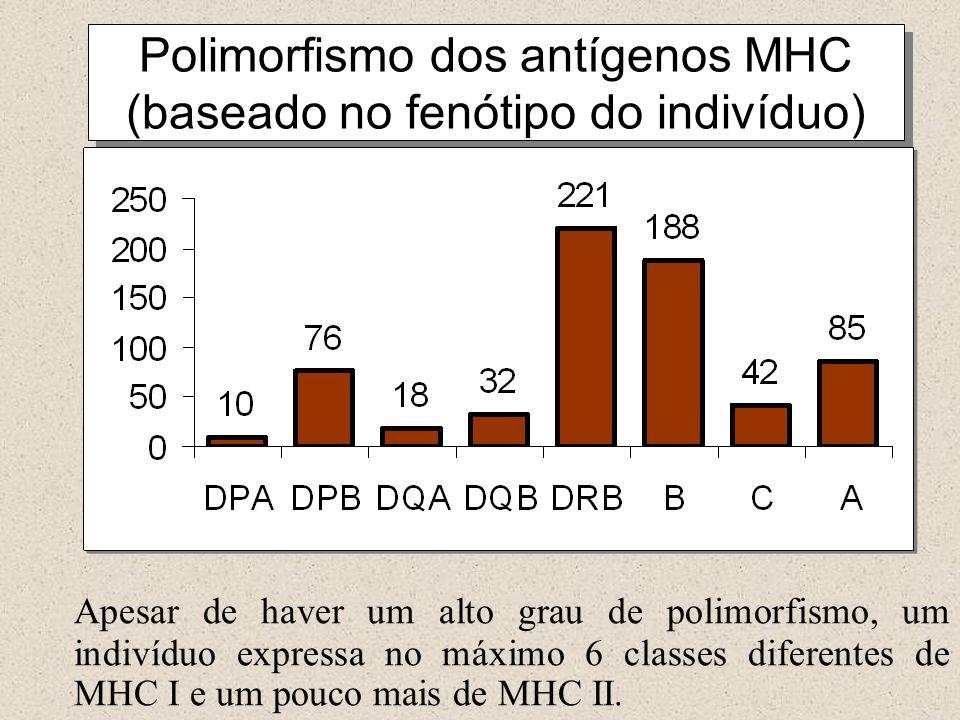 Polimorfismo dos antígenos MHC (baseado no fenótipo do indivíduo) Apesar de haver um alto grau de polimorfismo, um indivíduo expressa no máximo 6 classes diferentes de MHC I e um pouco mais de MHC II.
