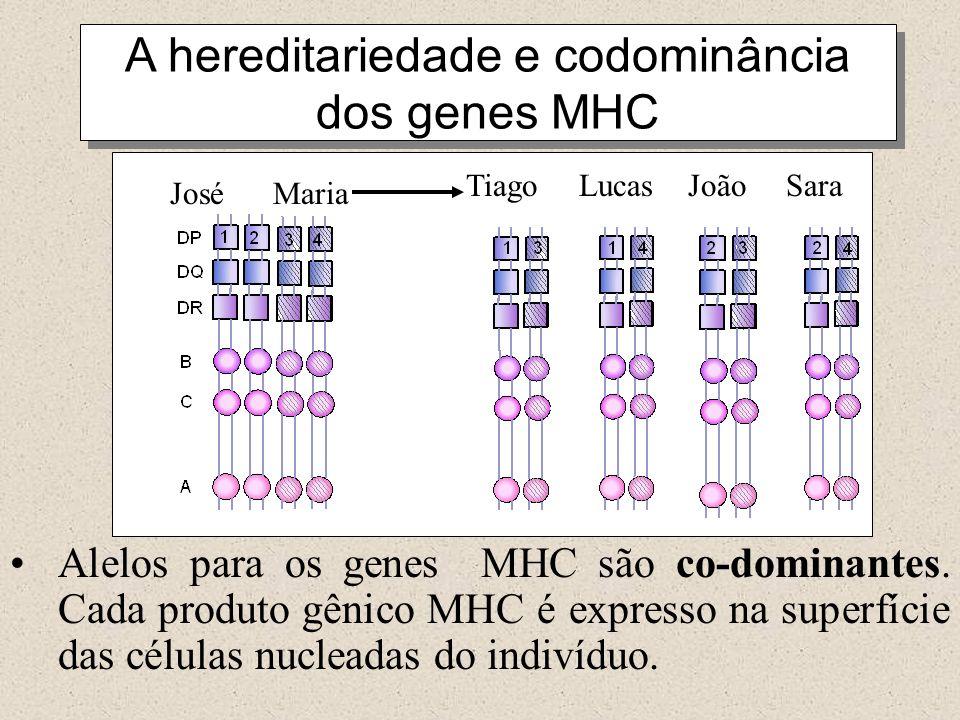A hereditariedade e codominância dos genes MHC José Maria Tiago Lucas João Sara Alelos para os genes MHC são co-dominantes. Cada produto gênico MHC é
