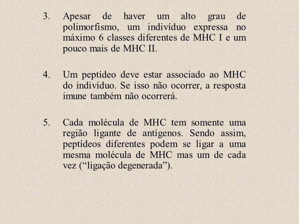 3.Apesar de haver um alto grau de polimorfismo, um indivíduo expressa no máximo 6 classes diferentes de MHC I e um pouco mais de MHC II. 4.Um peptídeo