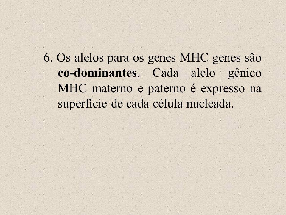 6. Os alelos para os genes MHC genes são co-dominantes. Cada alelo gênico MHC materno e paterno é expresso na superfície de cada célula nucleada.