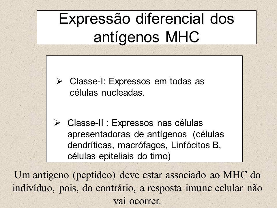 Classe-I: Expressos em todas as células nucleadas. Classe-II : Expressos nas células apresentadoras de antígenos (células dendríticas, macrófagos, Lin