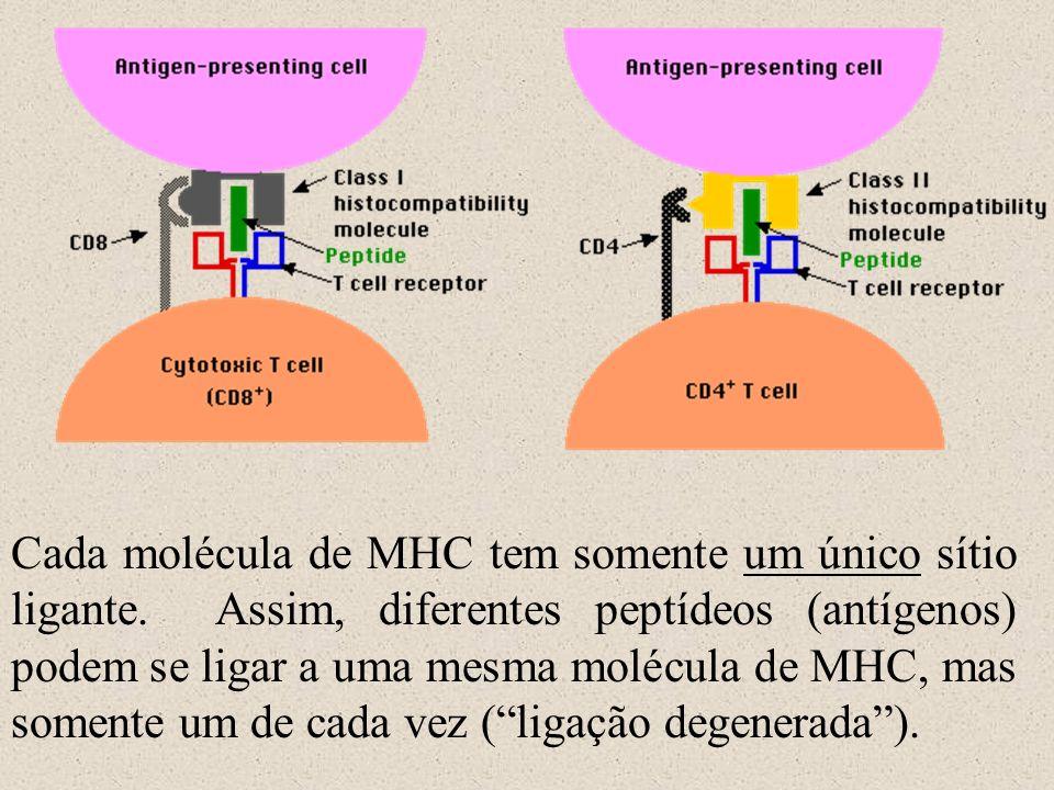 Cada molécula de MHC tem somente um único sítio ligante. Assim, diferentes peptídeos (antígenos) podem se ligar a uma mesma molécula de MHC, mas somen