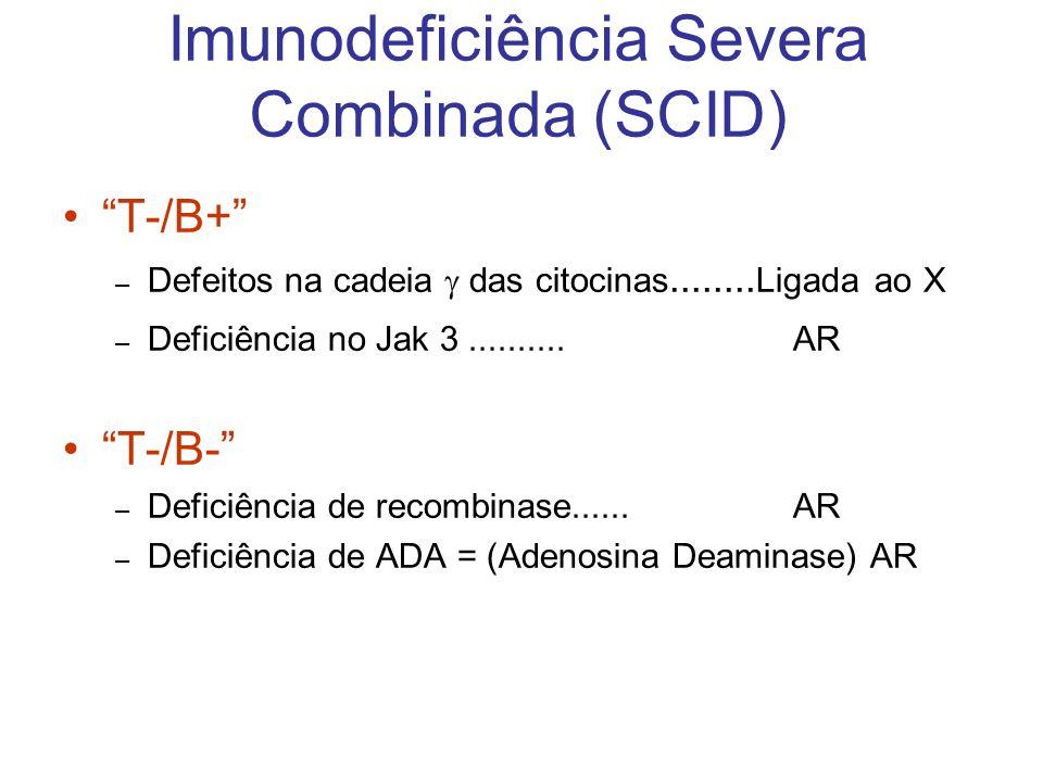 Imunodeficiência Severa Combinada (SCID) T-/B+ – Defeitos na cadeia das citocinas........ Ligada ao X – Deficiência no Jak 3..........AR T-/B- – Defic