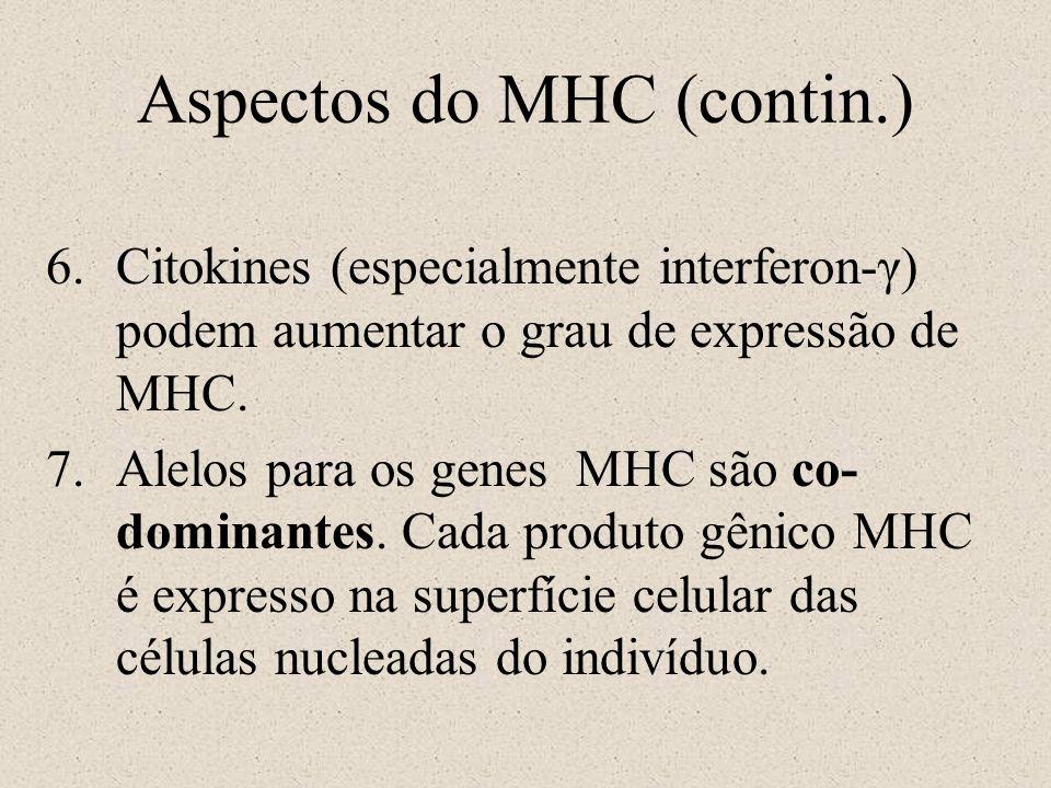 Aspectos do MHC (contin.) 6.Citokines (especialmente interferon-γ) podem aumentar o grau de expressão de MHC. 7.Alelos para os genes MHC são co- domin
