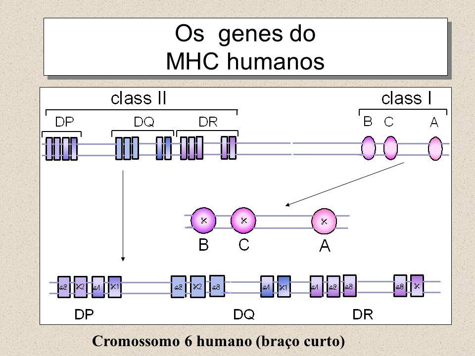 Cromossomo 6 humano (braço curto)