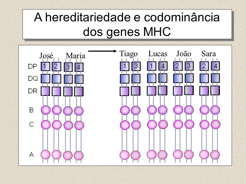 A hereditariedade e codominância dos genes MHC José Maria Tiago Lucas João Sara