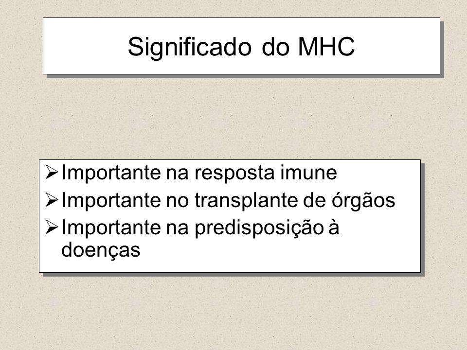 Significado do MHC Importante na resposta imune Importante no transplante de órgãos Importante na predisposição à doenças Importante na resposta imune