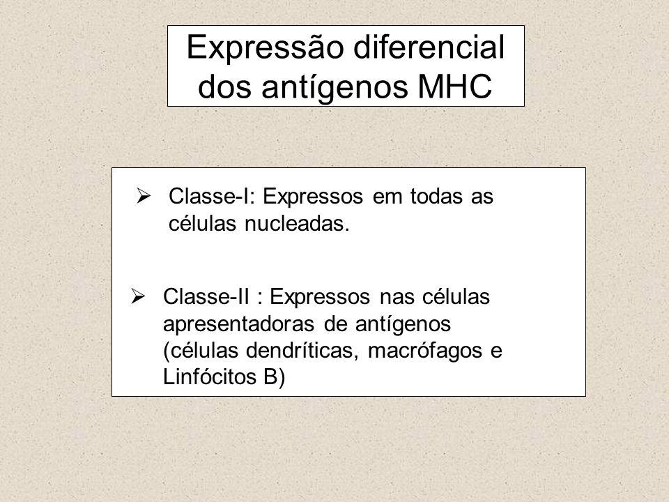 Classe-I: Expressos em todas as células nucleadas. Classe-II : Expressos nas células apresentadoras de antígenos (células dendríticas, macrófagos e Li