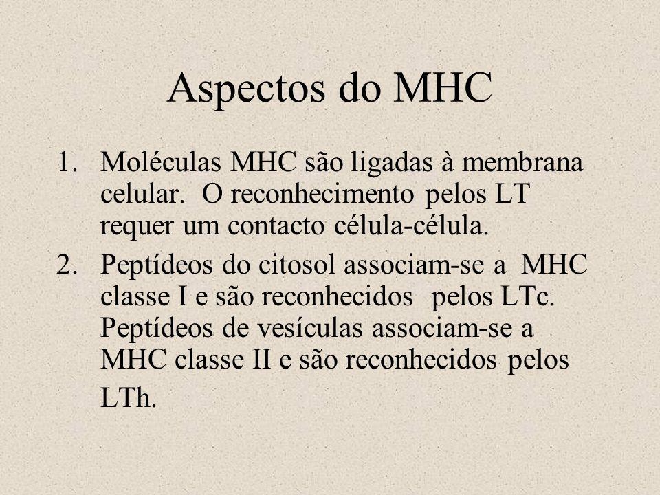 Aspectos do MHC 1.Moléculas MHC são ligadas à membrana celular. O reconhecimento pelos LT requer um contacto célula-célula. 2.Peptídeos do citosol ass