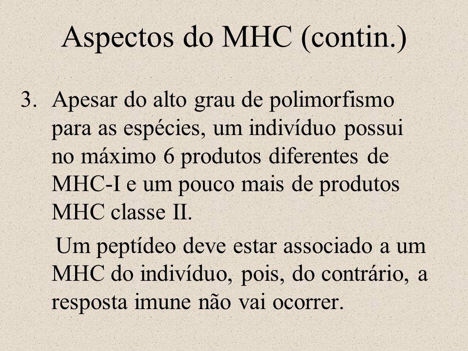 Aspectos do MHC (contin.) 3.Apesar do alto grau de polimorfismo para as espécies, um indivíduo possui no máximo 6 produtos diferentes de MHC-I e um po