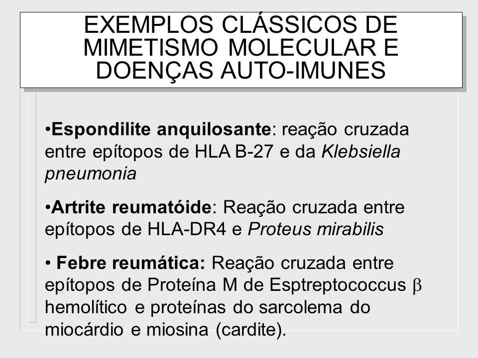 EXEMPLOS CLÁSSICOS DE MIMETISMO MOLECULAR E DOENÇAS AUTO-IMUNES Espondilite anquilosante: reação cruzada entre epítopos de HLA B-27 e da Klebsiella pn