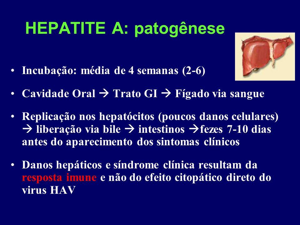 HEPATITE A: patogênese Incubação: média de 4 semanas (2-6) Cavidade Oral Trato GI Fígado via sangue Replicação nos hepatócitos (poucos danos celulares) liberação via bile intestinos fezes 7-10 dias antes do aparecimento dos sintomas clínicos Danos hepáticos e síndrome clínica resultam da resposta imune e não do efeito citopático direto do virus HAV