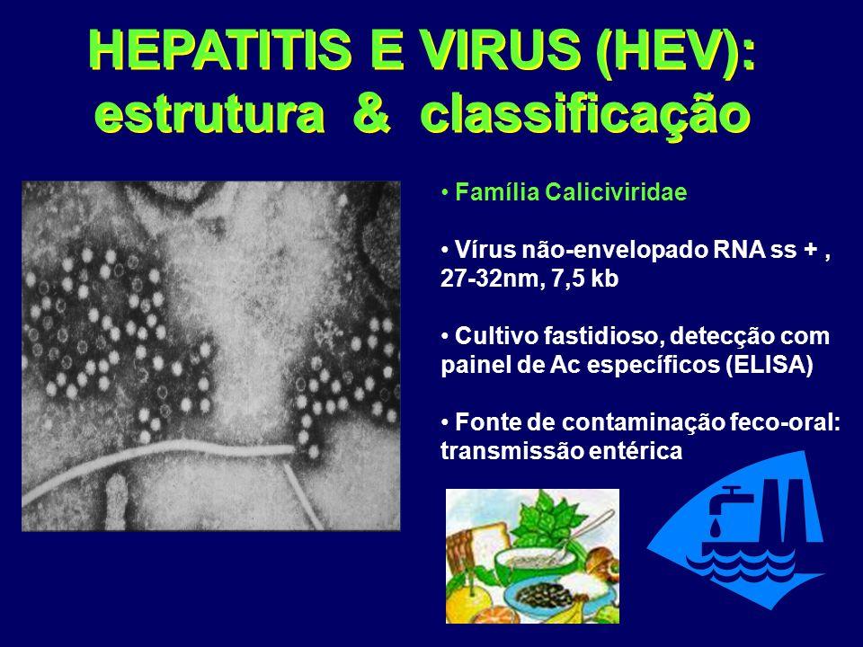 HEPATITIS E VIRUS (HEV): estrutura & classificação Família Caliciviridae Vírus não-envelopado RNA ss +, 27-32nm, 7,5 kb Cultivo fastidioso, detecção com painel de Ac específicos (ELISA) Fonte de contaminação feco-oral: transmissão entérica
