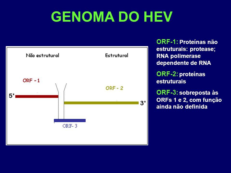 GENOMA DO HEV ORF-1: Proteínas não estruturais: protease; RNA polimerase dependente de RNA ORF-2: proteínas estruturais ORF-3: sobreposta às ORFs 1 e 2, com função ainda não definida