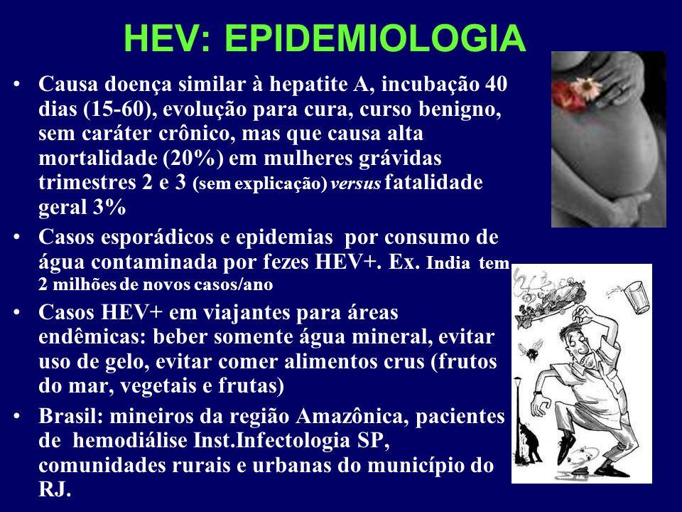 HEV: EPIDEMIOLOGIA Causa doença similar à hepatite A, incubação 40 dias (15-60), evolução para cura, curso benigno, sem caráter crônico, mas que causa alta mortalidade (20%) em mulheres grávidas trimestres 2 e 3 (sem explicação) versus fatalidade geral 3% Casos esporádicos e epidemias por consumo de água contaminada por fezes HEV+.