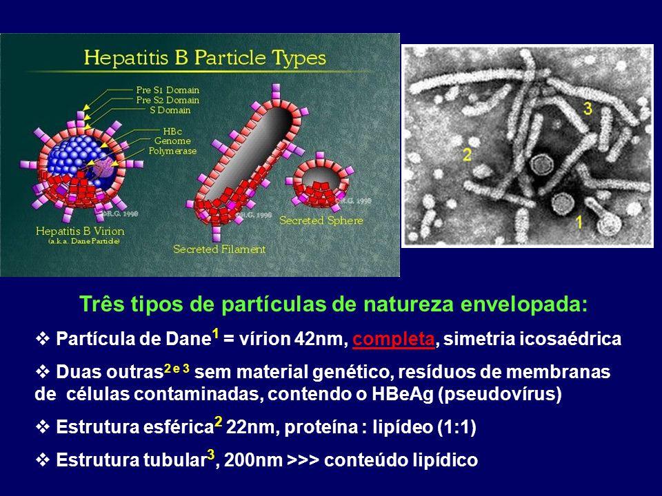 Três tipos de partículas de natureza envelopada: Partícula de Dane 1 = vírion 42nm, completa, simetria icosaédrica Duas outras 2 e 3 sem material genético, resíduos de membranas de células contaminadas, contendo o HBeAg (pseudovírus) Estrutura esférica 2 22nm, proteína : lipídeo (1:1) Estrutura tubular 3, 200nm >>> conteúdo lipídico