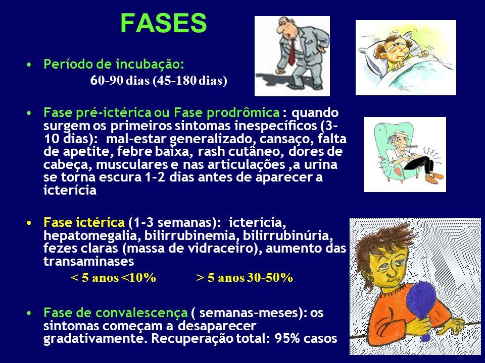 FASES Período de incubação: 6 0-90 dias (45-180 dias) Fase pré-ictérica ou Fase prodrômica : quando surgem os primeiros sintomas inespecíficos (3- 10 dias): mal-estar generalizado, cansaço, falta de apetite, febre baixa, rash cutâneo, dores de cabeça, musculares e nas articulações,a urina se torna escura 1-2 dias antes de aparecer a icterícia Fase ictérica (1-3 semanas): icterícia, hepatomegalia, bilirrubinemia, bilirrubinúria, fezes claras (massa de vidraceiro), aumento das transaminases 5 anos 30-50% Fase de convalescença ( semanas-meses): os sintomas começam a desaparecer gradativamente.