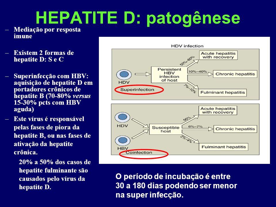 HEPATITE D: patogênese –Mediação por resposta imune –Existem 2 formas de hepatite D: S e C –Superinfecção com HBV: aquisição de hepatite D em portadores crônicos de hepatite B (70-80% versus 15-30% pcts com HBV aguda) –Este vírus é responsável pelas fases de piora da hepatite B, ou nas fases de ativação da hepatite crônica.
