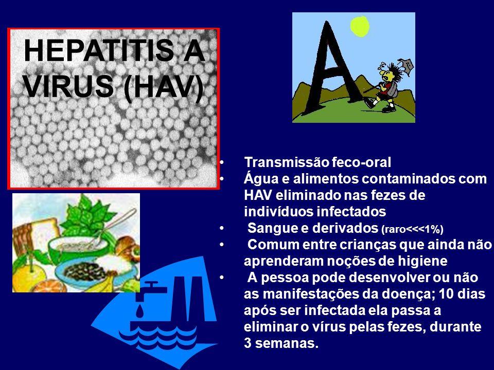 HEPATITIS A VIRUS (HAV) Transmissão feco-oral Água e alimentos contaminados com HAV eliminado nas fezes de indivíduos infectados Sangue e derivados (r