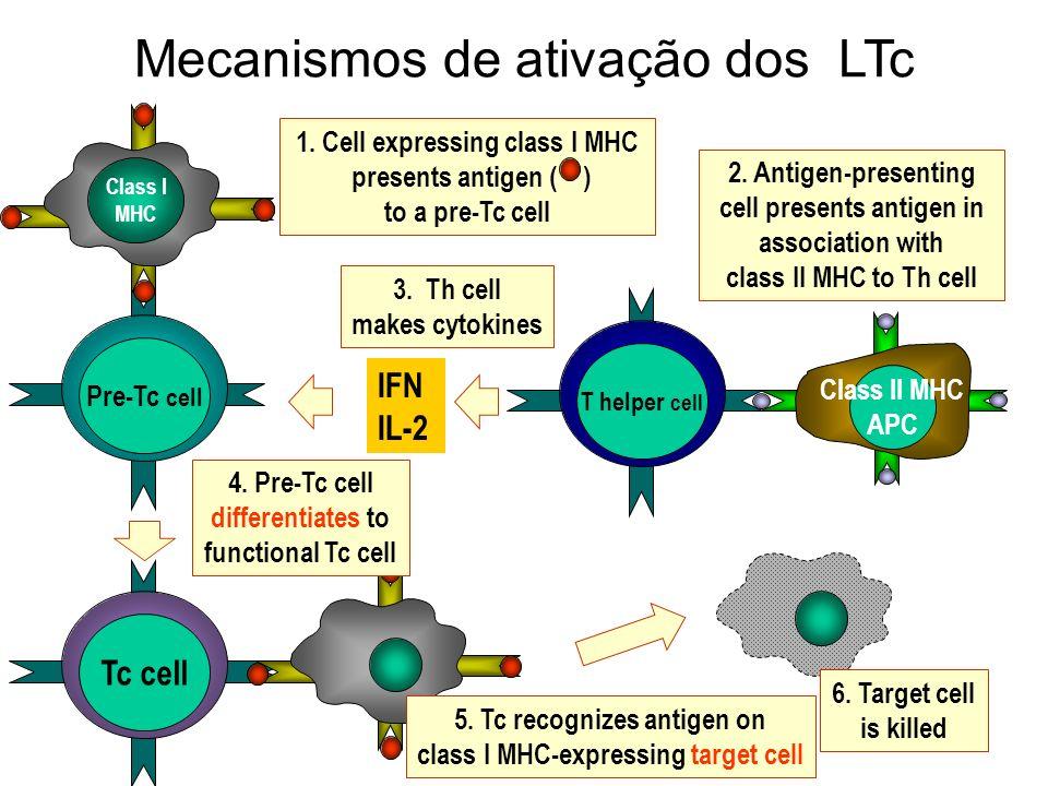 Mecanismos de ativação dos LTc Pre-Tc cell Tc cell T helper cell Class I MHC Class II MHC APC 1. Cell expressing class I MHC presents antigen ( ) to a