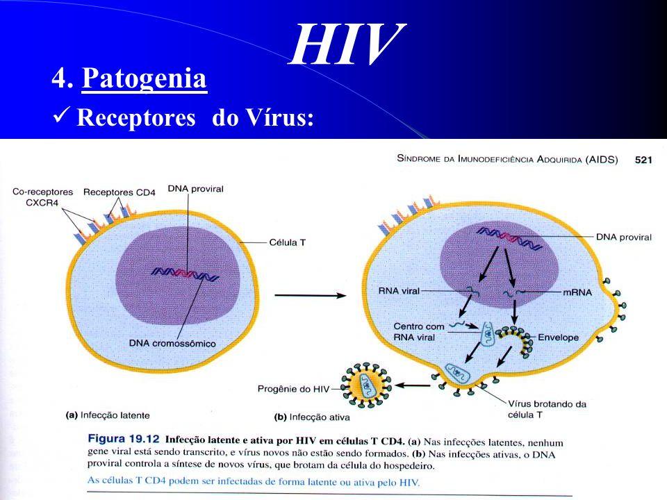 HIV 4. Patogenia Receptores do Vírus: