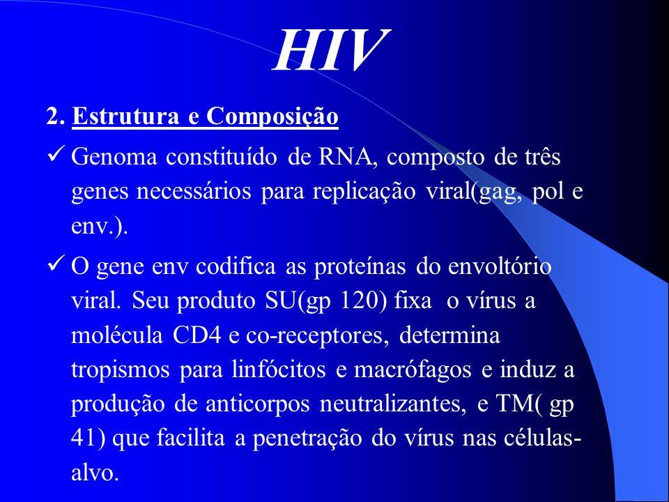 HIV 2. Estrutura e Composição Genoma constituído de RNA, composto de três genes necessários para replicação viral(gag, pol e env.). O gene env codific