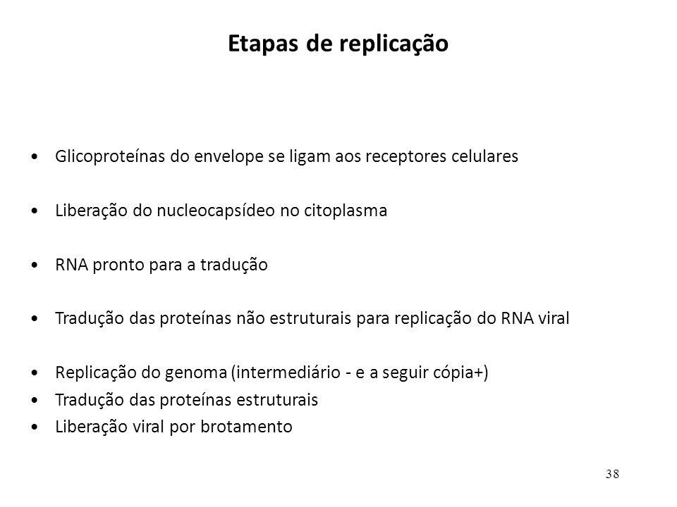 38 Etapas de replicação Glicoproteínas do envelope se ligam aos receptores celulares Liberação do nucleocapsídeo no citoplasma RNA pronto para a tradu
