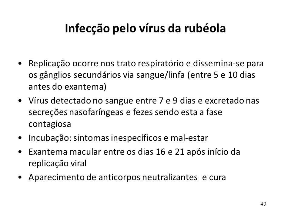 40 Infecção pelo vírus da rubéola Replicação ocorre nos trato respiratório e dissemina-se para os gânglios secundários via sangue/linfa (entre 5 e 10