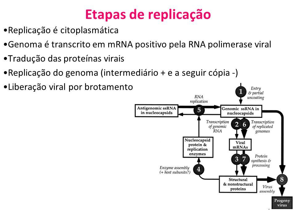 5 Etapas de replicação Replicação é citoplasmática Genoma é transcrito em mRNA positivo pela RNA polimerase viral Tradução das proteínas virais Replic