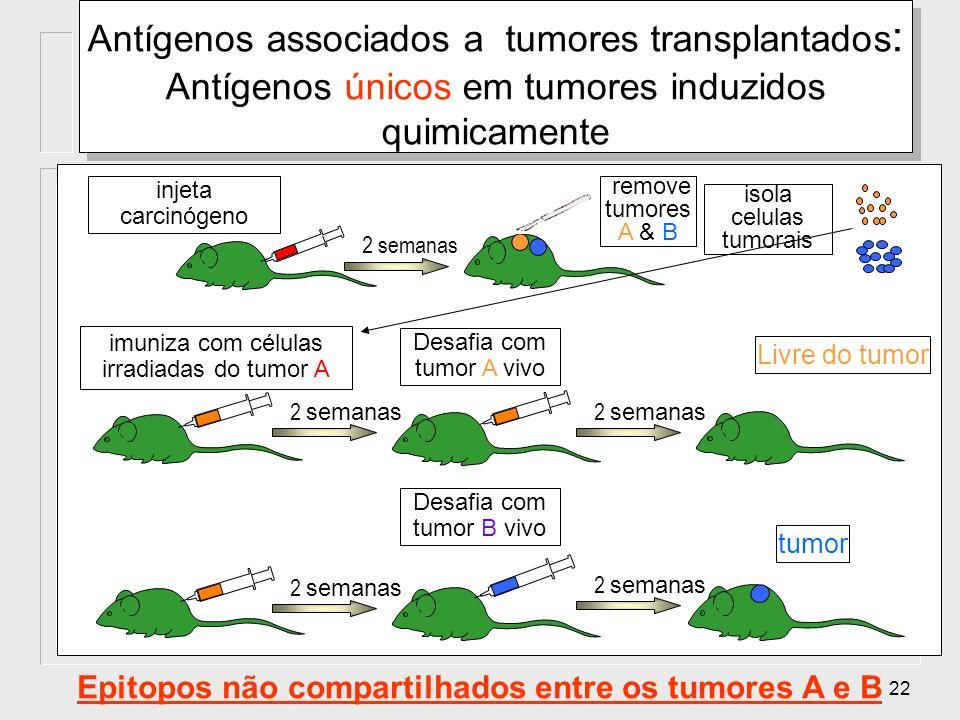 22 injeta carcinógeno Antígenos associados a tumores transplantados : Antígenos únicos em tumores induzidos quimicamente 2 semanas remove tumores A &