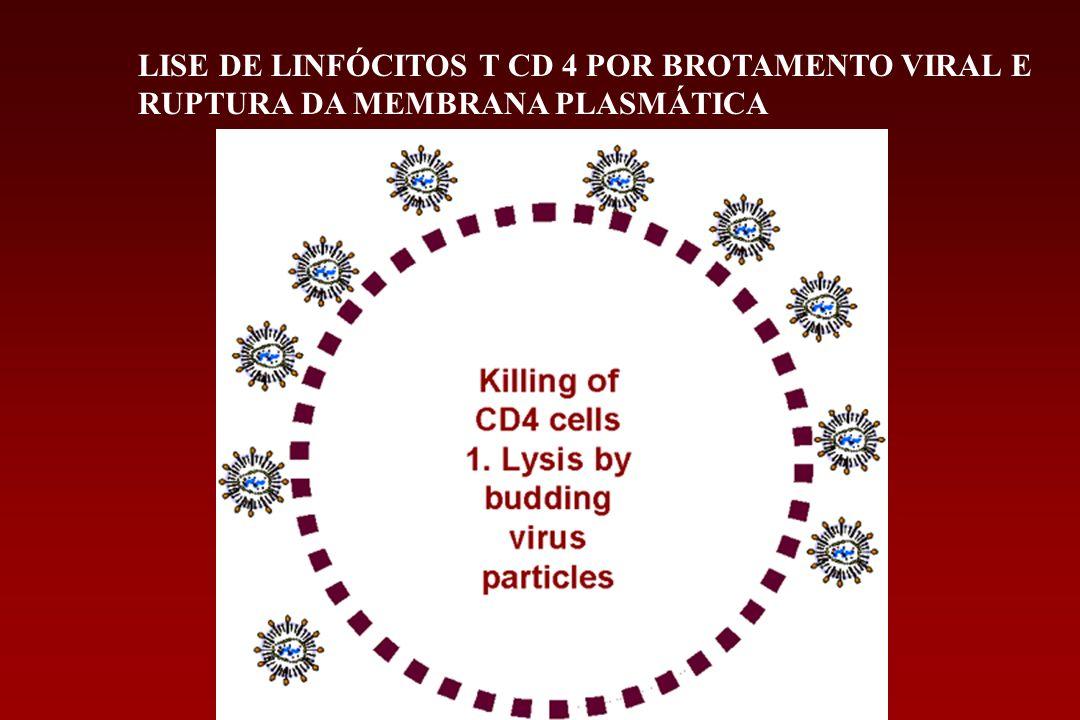 LISE DE LINFÓCITOS T CD 4 POR BROTAMENTO VIRAL E RUPTURA DA MEMBRANA PLASMÁTICA