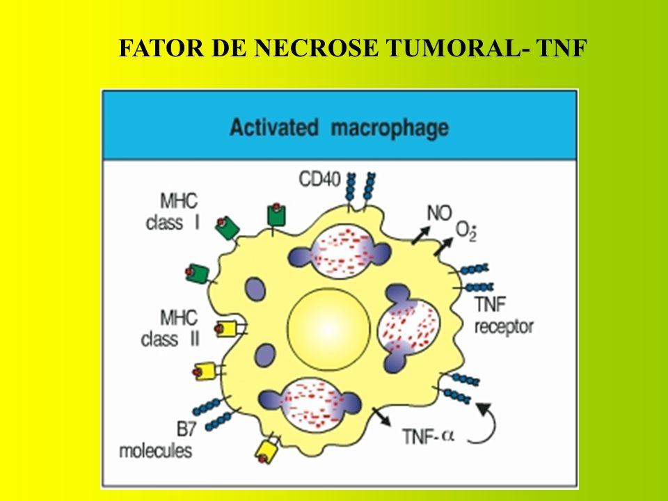 FATOR DE NECROSE TUMORAL- TNF