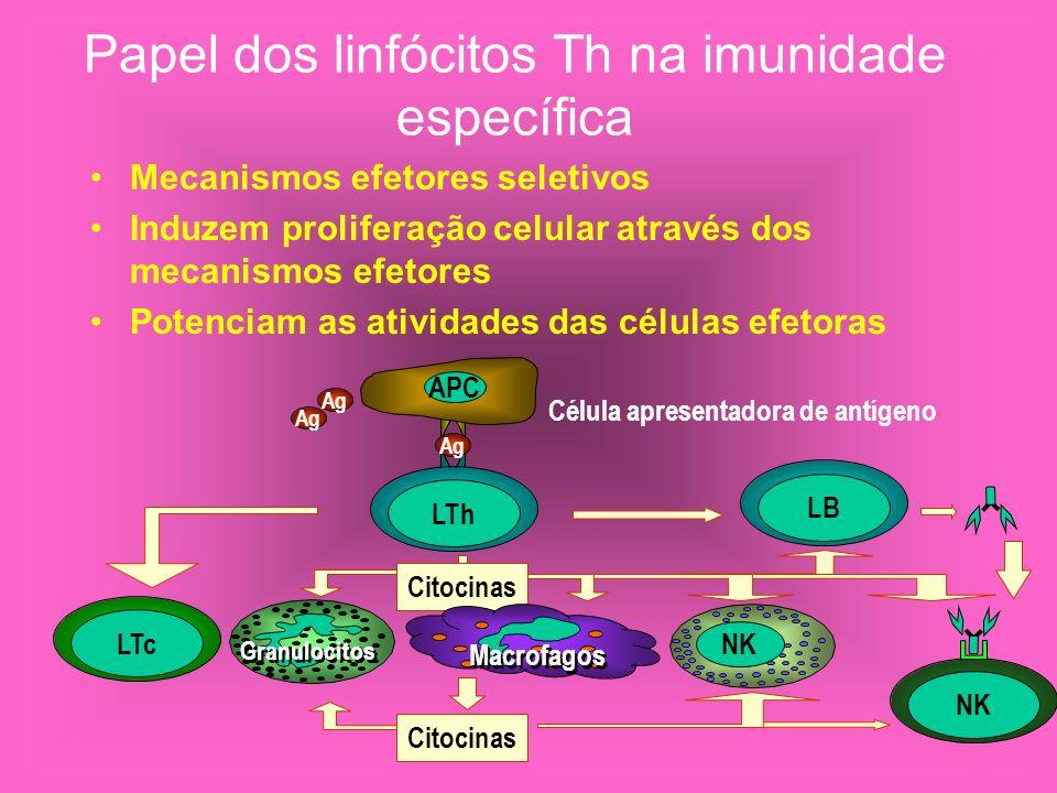Papel dos linfócitos Th na imunidade específica Mecanismos efetores seletivos Induzem proliferação celular através dos mecanismos efetores Potenciam a